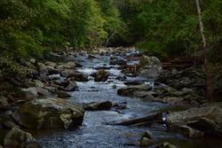 Rock Creek Park Creek