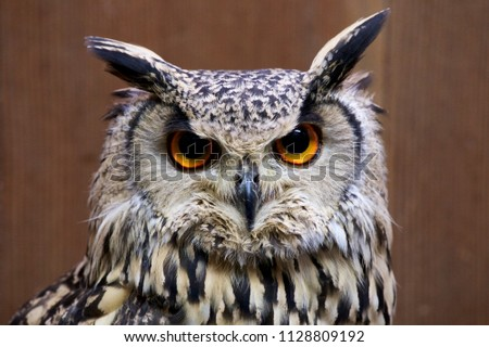 Rock eagle owl. The picture is a figure of a cute owl.
