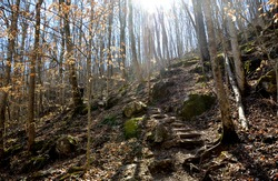 Rock steps on hiking path trail in the hardwood forest.  Sunshine streaming through the trees.