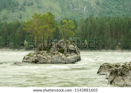 Rock with coniferous trees on mountain river. Mountain river Katun in Altay, Siberia, Russia.