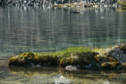 Rock with mosses and grasses near water edge of mountain lake in sunlight. Scenic landscape with mountain flora on rock in shape of crocodile or lizard near edge of glacial lake. Sunny vivid scenery.