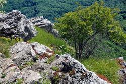 Rocks and trees in Stara Planina in summer