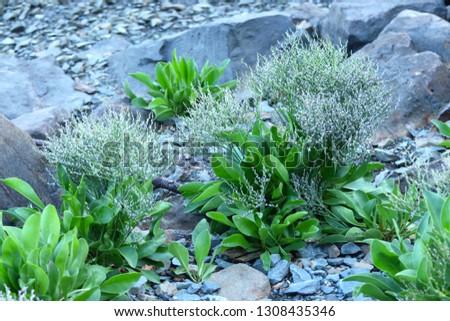 Rocks and Vegetation On the Seashore #1308435346