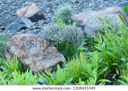 Rocks and Vegetation On the Seashore #1308435349