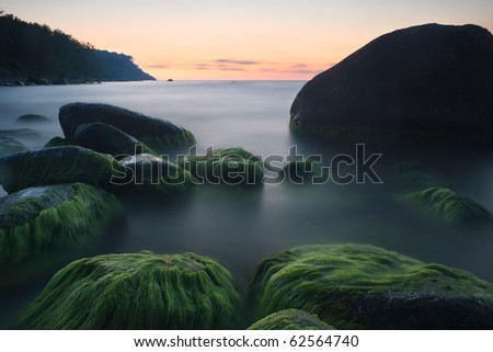 rocks covered with algae