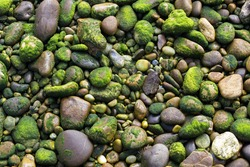 Rocks covered with seaweed at low tide on a shore
