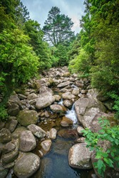 rocks in the stream in a forest near wairere falls, bay of plenty, new zealand