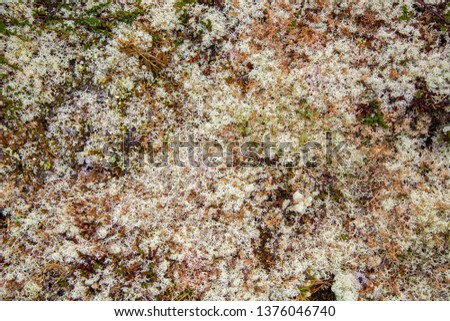 Rocks overgrown with white moss. Carpet moss white. Moss on a rock face. Relief and texture of stone with patterns and moss. #1376046740