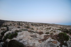 Rocks, plants and nature of Lampedusa. Summer 2009.