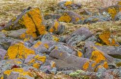 Rocks scattered in grasslands on the Avalon Peninsula