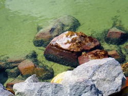 Rocks with small black lake shells on the clear green water at the rocky shore of the southern shore of the lake Balaton in Hungary on a sunny summer morning