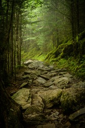 Rocky Appalachian Trail in Fog in summer
