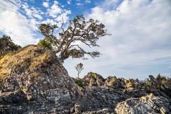 Rocky coast with a single pohutukawa tree on the Coromandel peninsula, New Zealand.