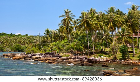 Rocky coastline and palm trees