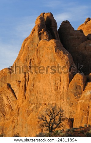 Rocky, desert landscape of tree and cliff at sunset, Arches National Park, Utah, USA