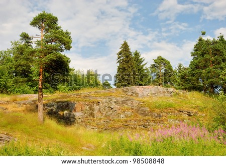rocky hill with pines and flowers in summer day