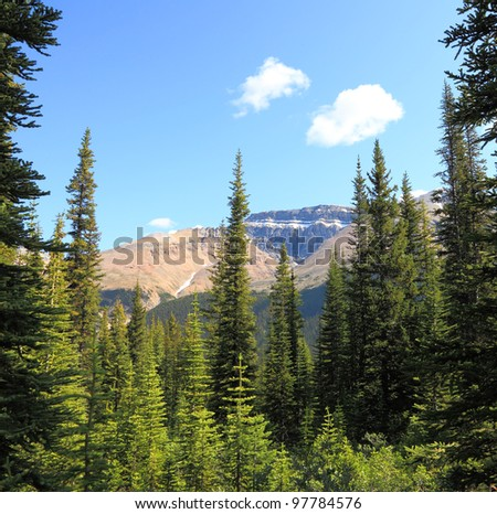 Rocky mountains covered with coniferous wood on a sky background. Jasper, Canada