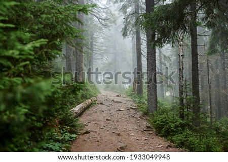 Rocky natural trail in the middle of evergreen forest in mountains on cloudy autumn day. Getaway vacation into natural surrounding. Mountain resort recreation, climbing. Hiking in the woods. Photo stock ©