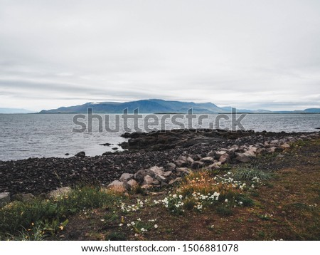 Rocky shoreline of Grotta area partially covered in seaweed, grass and wild flowers and with islands surrounding Reykjavik seen on the horizon, gloomy weather, Iceland.  #1506881078