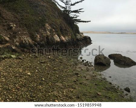 rocky shoreline with algae and tree #1519859948