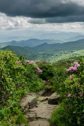 Rocky trail leaving Jane Bald lined with blooming Catawba rhododendron