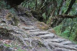 Rocky trail steps with green forest along trekking to Tadapani ,Annapurna himalayan range-Nepal