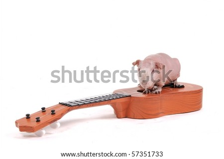 Rodent Musician on Guitar