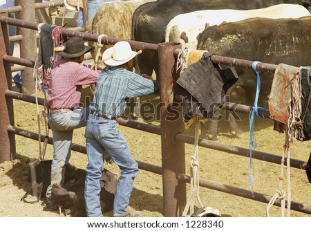 Rodeo cowboys look over the stock between riding events.