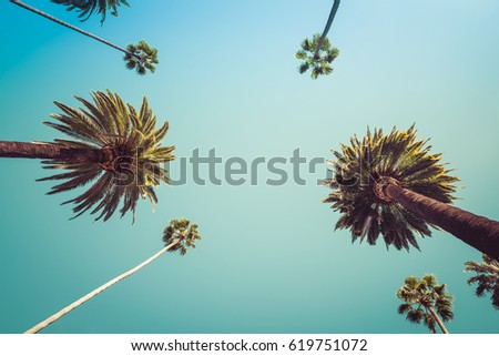 Rodeo Drive Beverly Hills Palm Trees. Beverly Hills Los Angeles Palm Trees off Rodeo Drive - Point of view photo of celebrity street in Beverly Hills. - Shutterstock ID 619751072