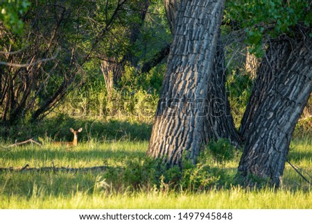 Roe Deer in the wilderness of Alberta in the wilderness of Alberta #1497945848
