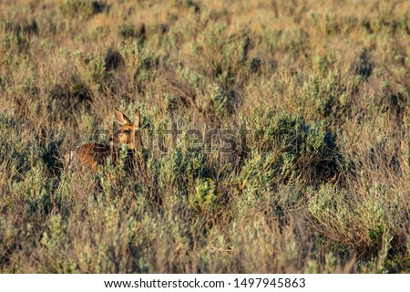 Roe Deer in the wilderness of Alberta in the wilderness of Alberta #1497945863
