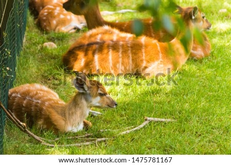 Deer in the nature zoo / deer on nature background Images