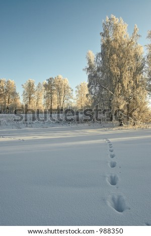 Roe's trail in the deep snow