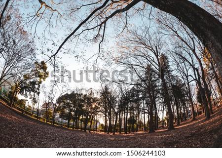 Roka Koshu Park with trees, in Setagawa, Tokyo, Japan Stok fotoğraf ©