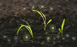 Role of nutrients in plant life for development. Soil with digital mineral nutrients icon.