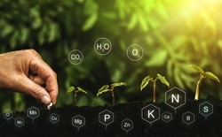 Role of nutrients in plant life. Hands planting seedling. Soil with digital mineral nutrients icon.