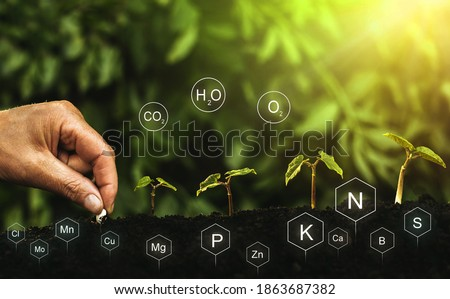 Role of nutrients in plant life. Hands planting seedling. Soil with digital mineral nutrients icon. Сток-фото ©