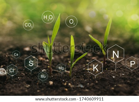 Role of nutrients mineral in Corn plant and soil life with digital mineral nutrients icon.