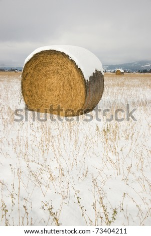 Rolled Hay Bale Sitting in Farmer Field after Fresh Winter Snow Agricultural Landscape