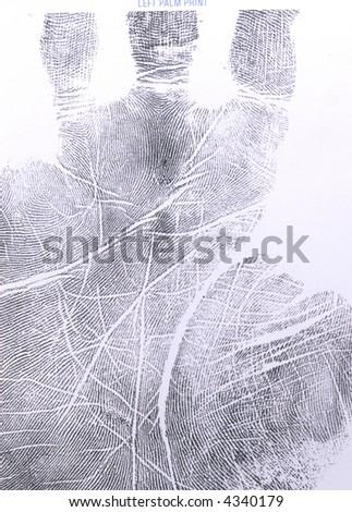 rolled left palm print impression.