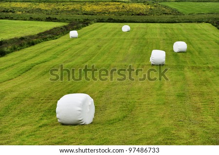 rolled silage bales in the meadow at Iceland