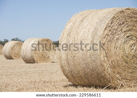 Rolled up hay bales on wheat field or dry meadow after harvest in rural agricultural farmland, blurred background and copy space. #229586611