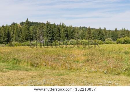Rolling forested hills near Maple Creek, Saskatchewan, Canada