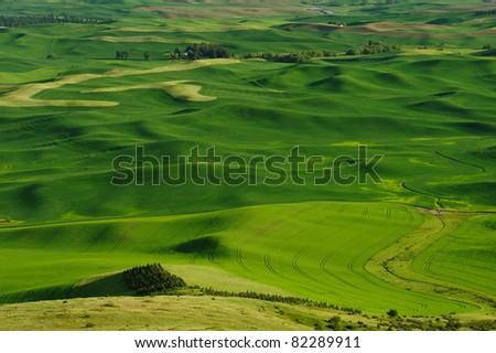 rolling hills and wheat fields in palouse area, washington, usa