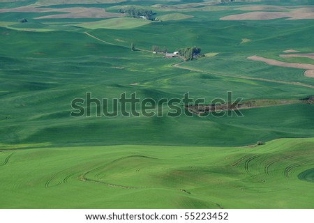 rolling hills and wheat fields in steptoe butte state park, washington, usa