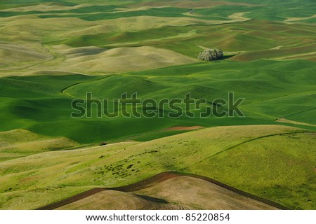 Rolling hills and wheat fields in sunset at steptoe butte state park, washington, usa