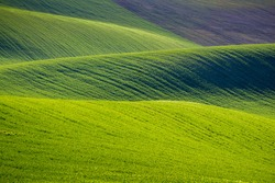 Rolling hills of green wheat fields. Amazing fairy minimalistic landscape with waves hills, rolling hills. Abstract nature background. South Moravia, Czech Republic