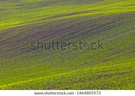 Rolling hills of green wheat fields. Amazing fairy minimalistic landscape with waves hills, rolling hills. Abstract nature background. Lithuania #1464805973