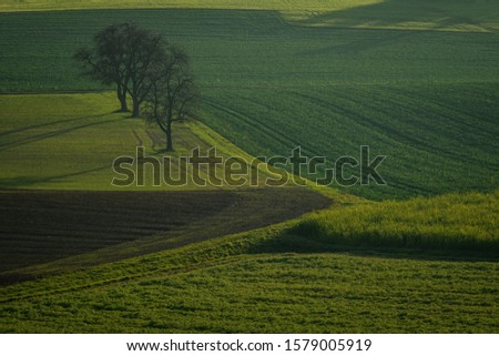 Rolling hills of green wheat fields. Amazing fairy minimalistic landscape with waves hills, rolling hills. Abstract nature background.