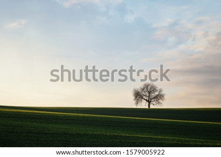 Rolling hills of green wheat fields. Amazing fairy minimalistic landscape with waves hills, rolling hills. Abstract nature background. #1579005922